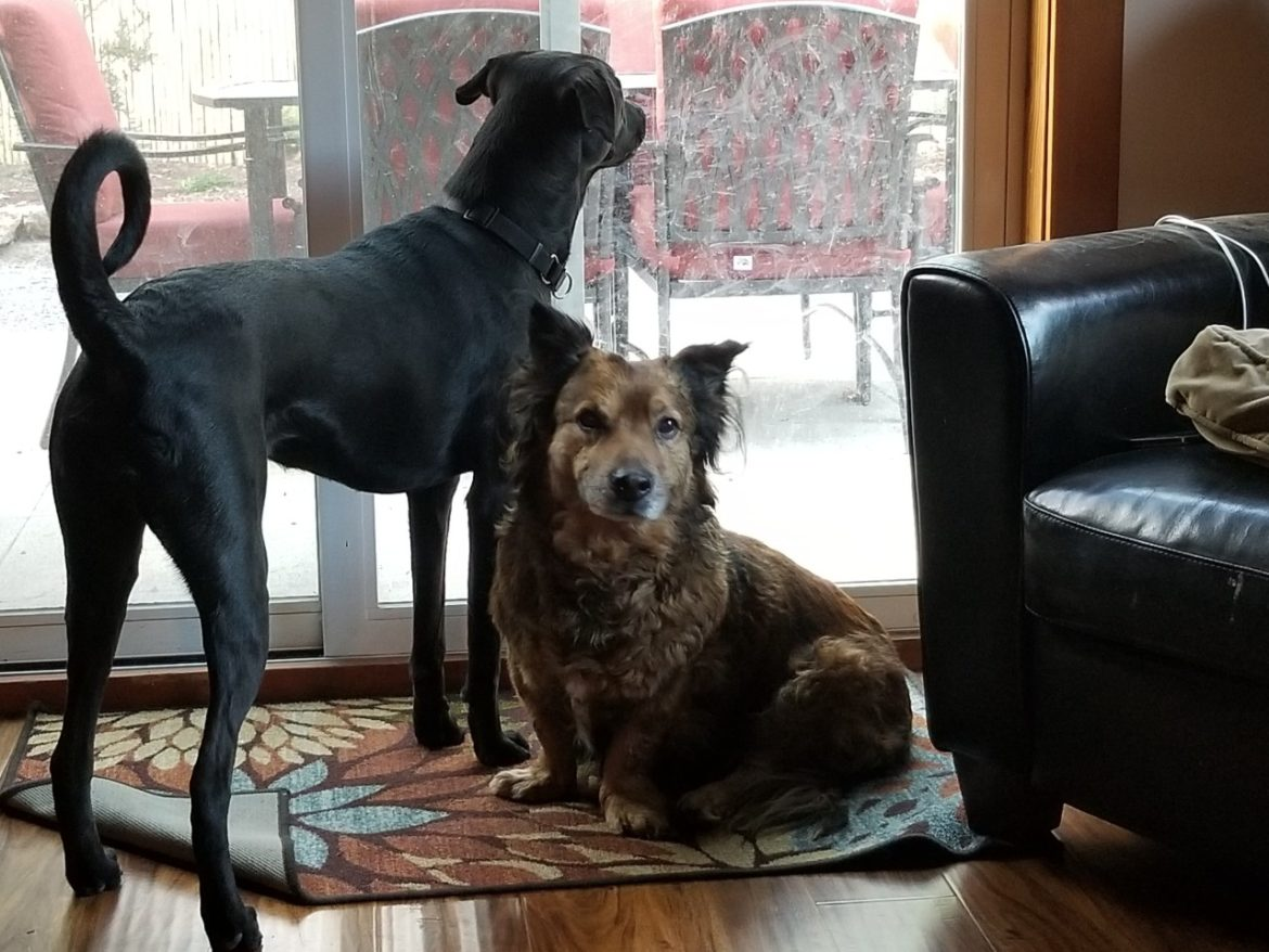 Two dogs: Jamison and Daisy